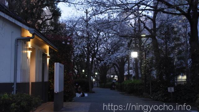 浜町緑道公園2020/03/20